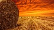 Zmiana terminu dla dywersyfikacji upraw