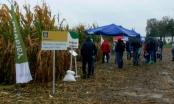 Dzień kukurydzy Syngenty w Cykowie
