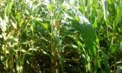 Jak epidemia wpływa na rolników?